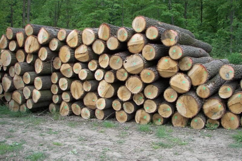 palivove-drevo