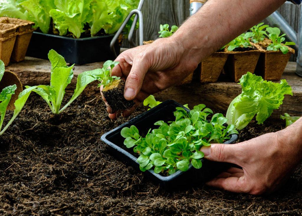 Jak mít na zahradě dokonalé záhony